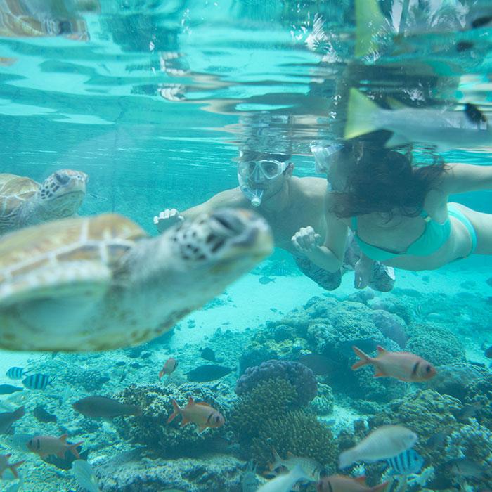 Tahiti Diving Vacation Packages From Tahiti Tourisme - Tahiti packages