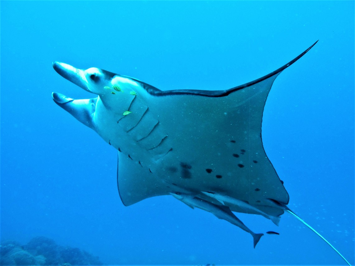 https://tahititourisme.com/wp-content/uploads/2017/08/Bora-Bora-Reef-Discovery-3.jpg