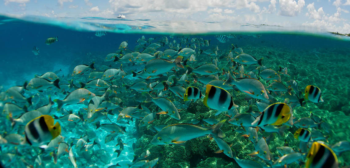 https://tahititourisme.com/wp-content/uploads/2017/08/RGIMAI-Snorkeling-2000x1200_20903.jpg