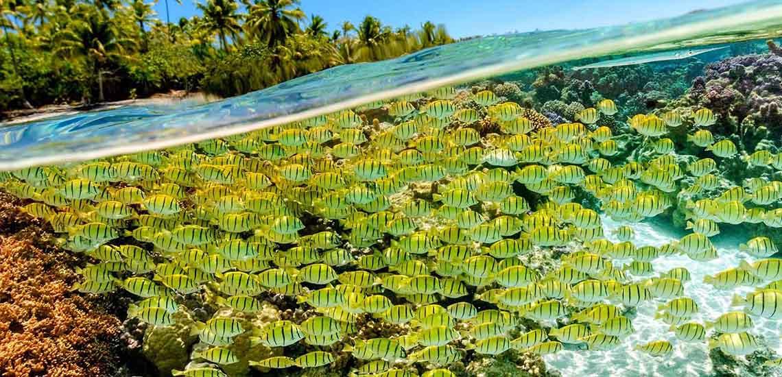 https://tahititourisme.com/wp-content/uploads/2017/08/TAHTPI-Coral-Garden-1140x550.jpg