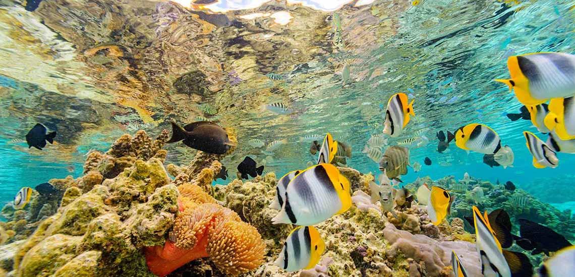 https://tahititourisme.com/wp-content/uploads/2017/08/TAHTPI-Snorkeling-1140x550.jpg