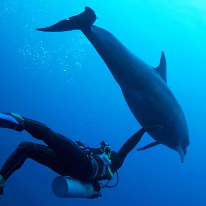 Rangiroa Diver's Delight