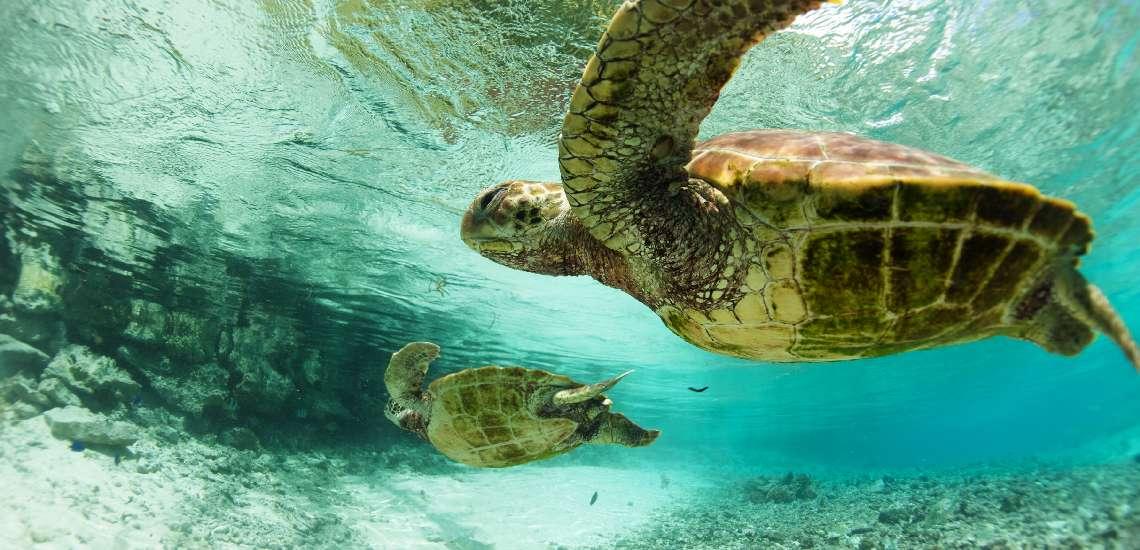 https://tahititourisme.com/wp-content/uploads/2017/08/Turtle-center_600.jpg