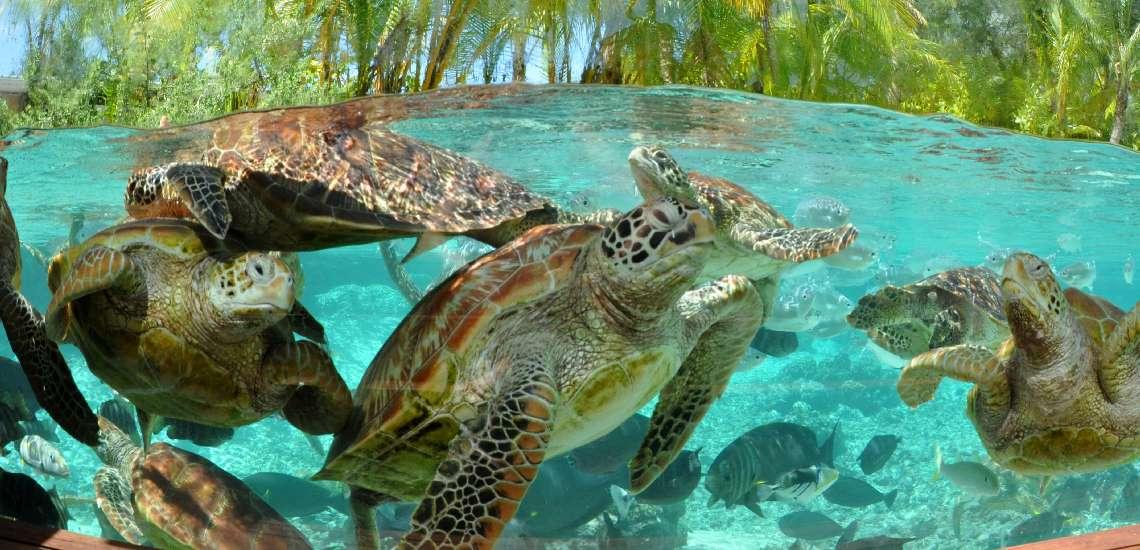 https://tahititourisme.com/wp-content/uploads/2017/08/Turtle-observatory_600.jpg