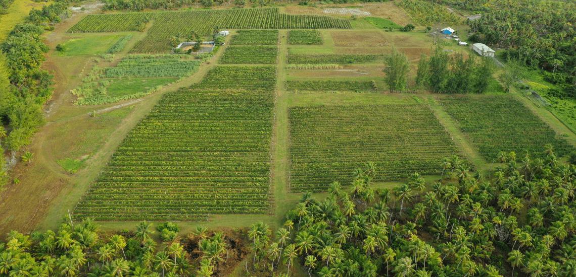 https://tahititourisme.com/wp-content/uploads/2017/08/Vin-de-Tahiti_1140x550-min.png