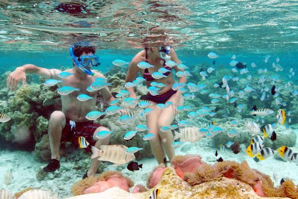 https://tahititourisme.com/wp-content/uploads/2017/08/jardin-de-corail-2.jpg
