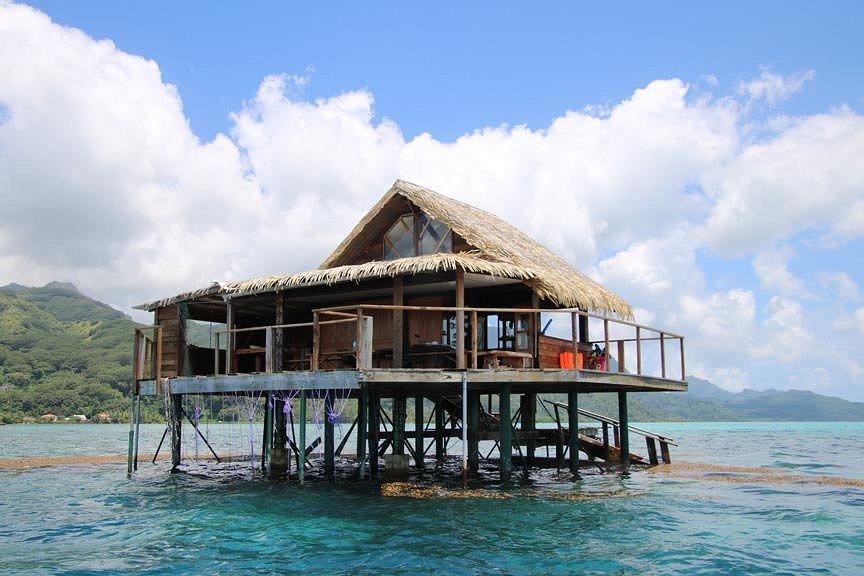 https://tahititourisme.com/wp-content/uploads/2017/08/pearl-farm-house-or-hut.jpg