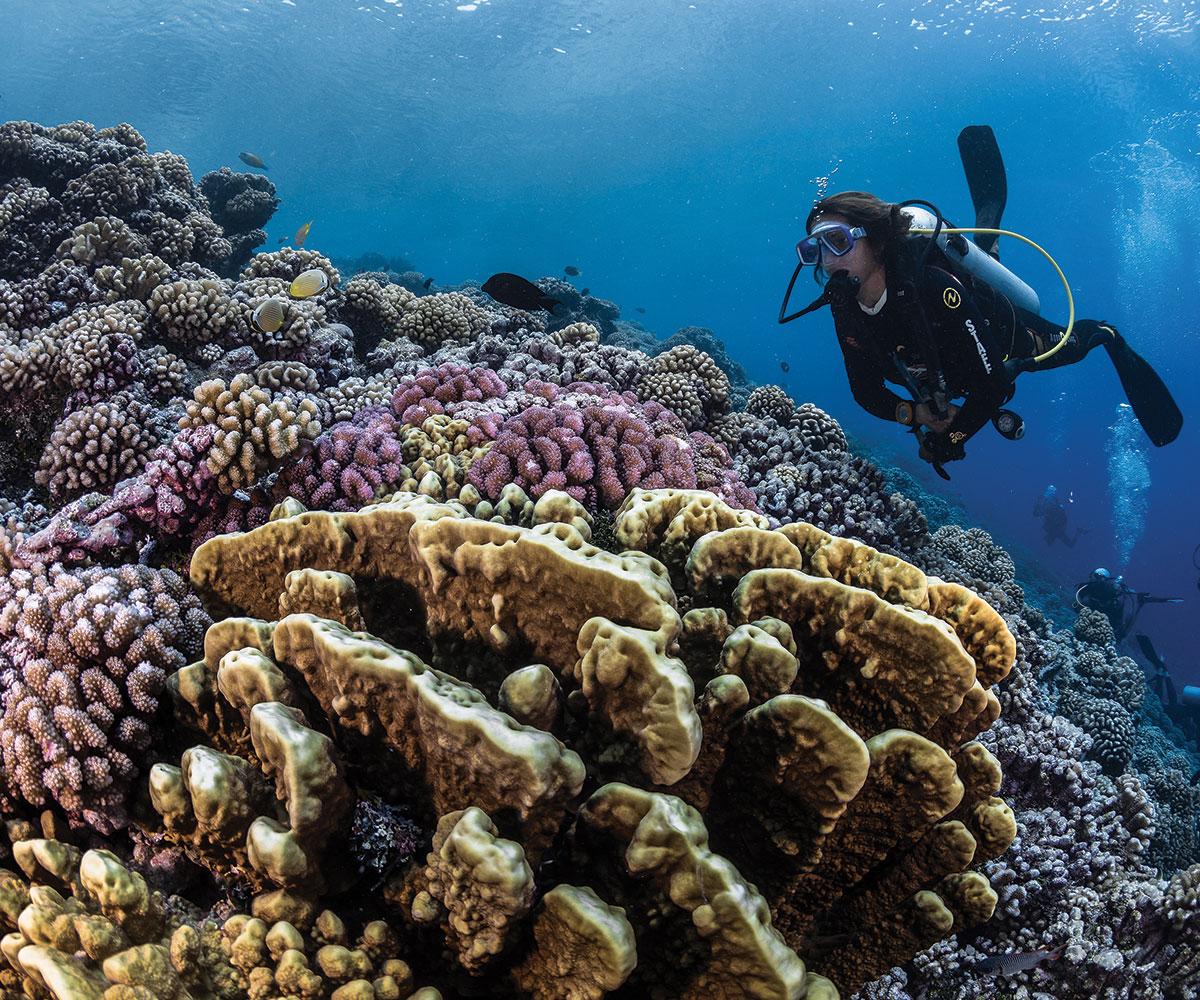 https://tahititourisme.com/wp-content/uploads/2017/08/sejours-plongees-aquatiki-fakarava-coraux-e-tahiti-travel-2.jpeg