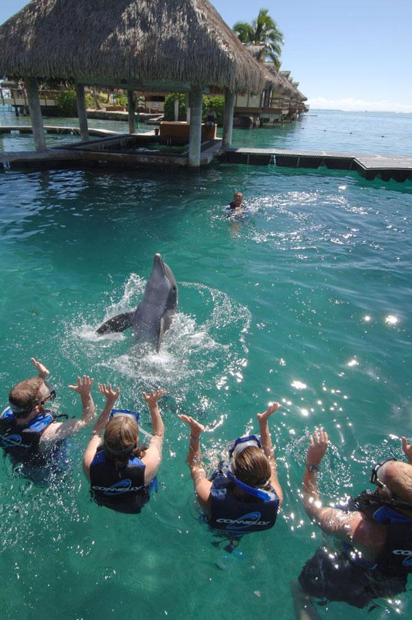 https://tahititourisme.com/wp-content/uploads/2017/10/Dolphin-Encounter.jpg