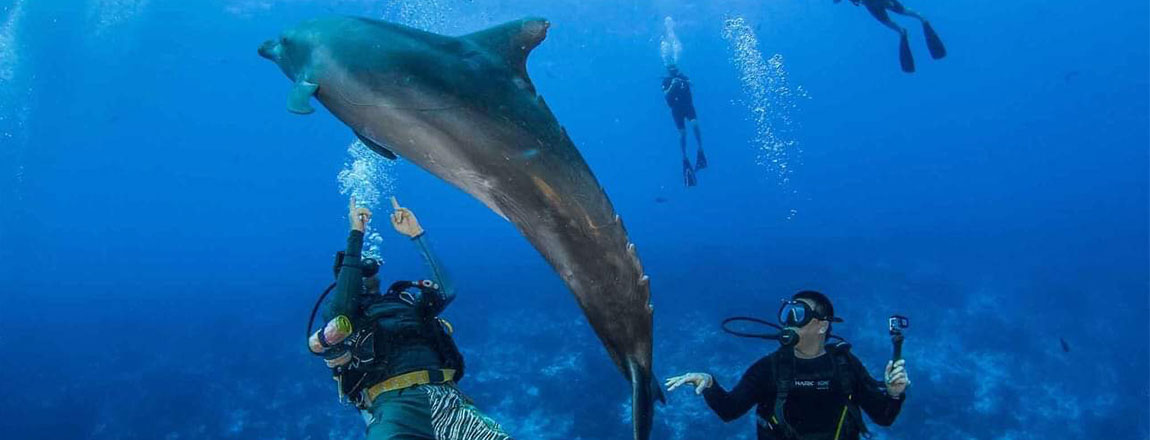 https://tahititourisme.com/wp-content/uploads/2017/10/Rangiroa-Diving-Center-1150x440px.jpg