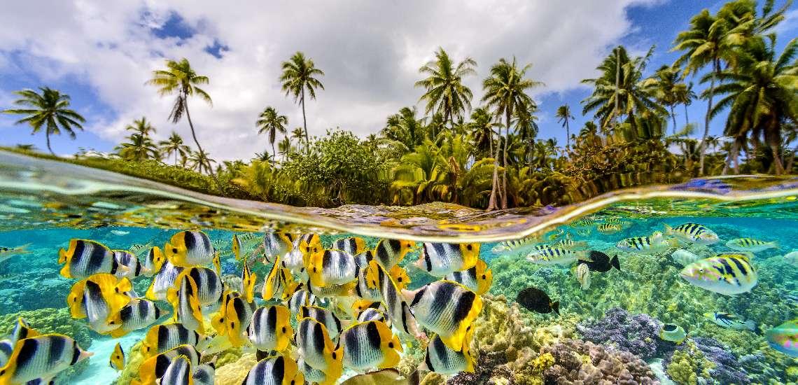 https://tahititourisme.com/wp-content/uploads/2017/11/Coral-garden_600.jpg