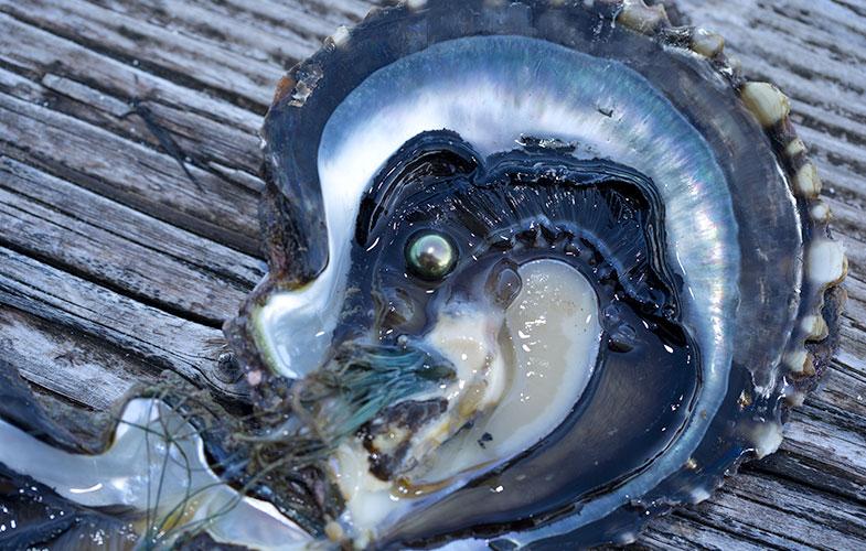 tahitian pearls