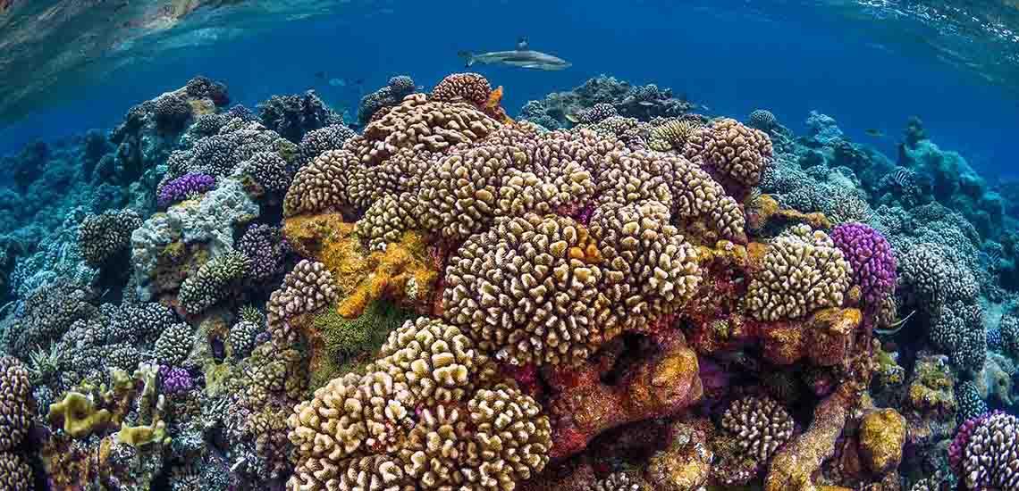 https://tahititourisme.com/wp-content/uploads/2018/07/Fakarava-Diving2-1140x550.jpg