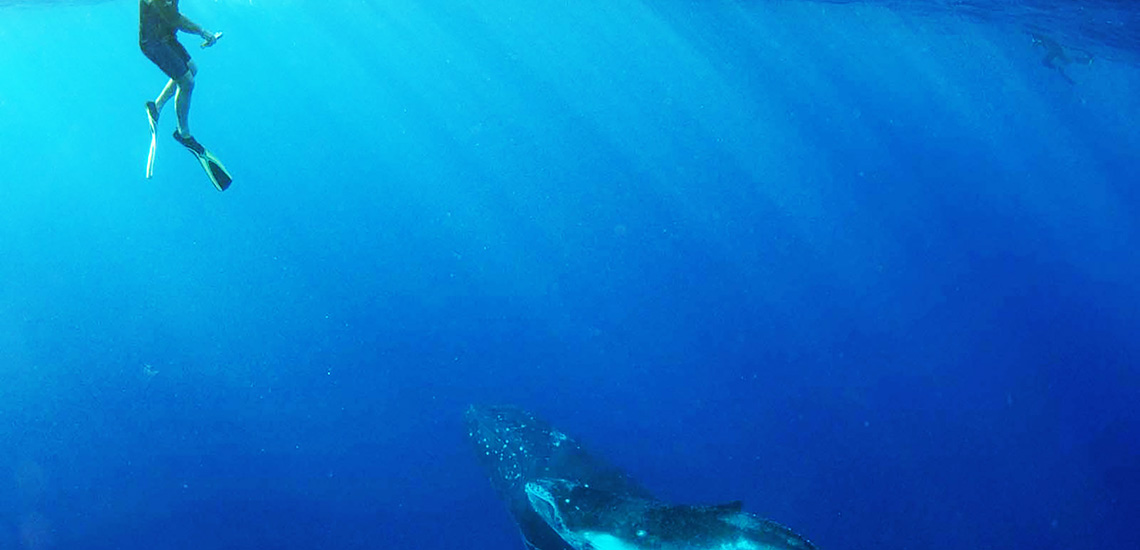 https://tahititourisme.com/wp-content/uploads/2018/07/Moorea-Swimming-with-Whales-1140x550.jpg