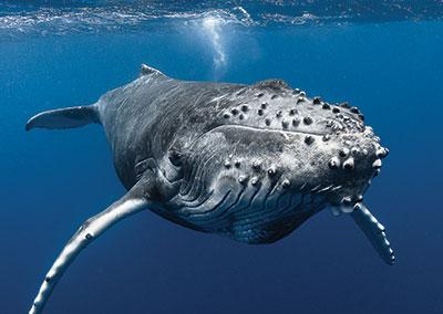https://tahititourisme.com/wp-content/uploads/2018/07/sejours-plongees-baleine-e-tahiti-travel-1.jpg