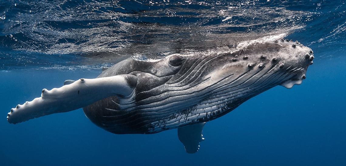 https://tahititourisme.com/wp-content/uploads/2018/07/whales.jpg