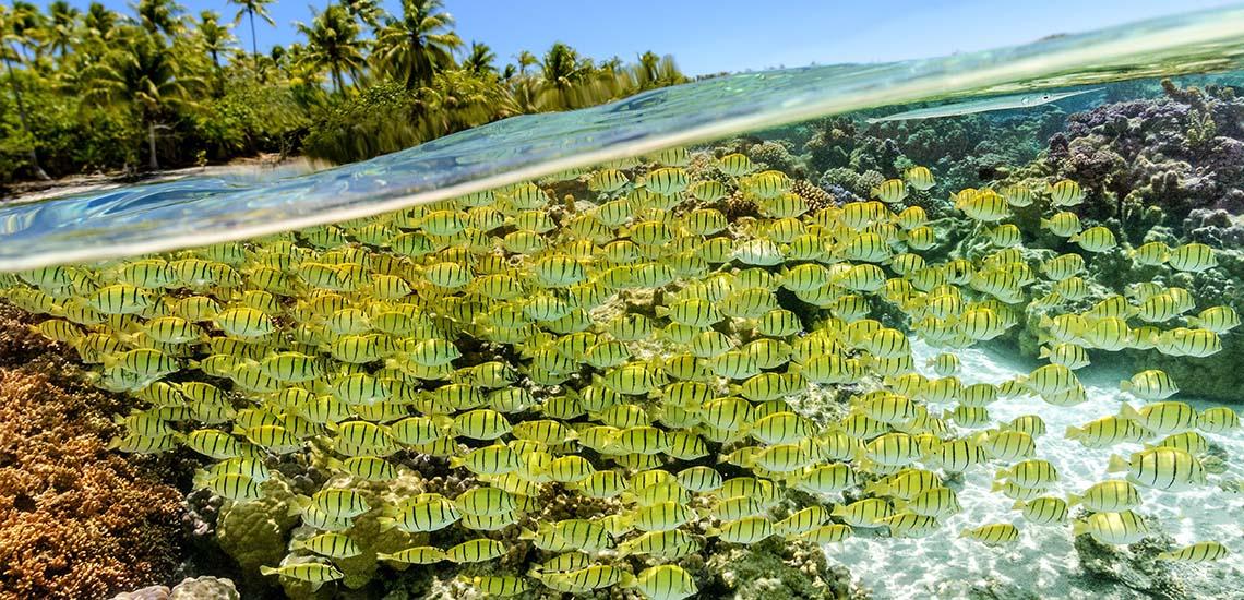 https://tahititourisme.com/wp-content/uploads/2018/12/le-tahaa-island-resort-drift-snorkeling-1140x550.jpg