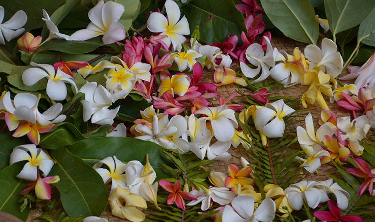 the international flower of tahiti