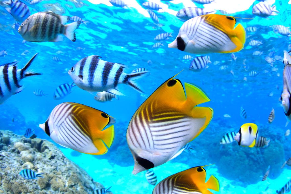 https://tahititourisme.com/wp-content/uploads/2019/02/40_Snorkelling.jpg