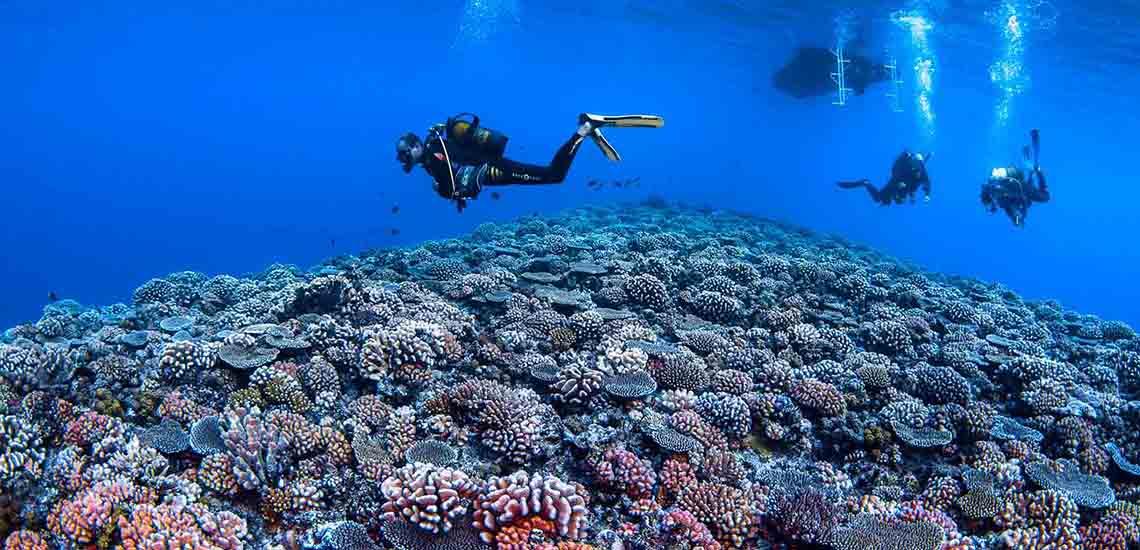 https://tahititourisme.com/wp-content/uploads/2019/02/Bora-Bora-Diving-2000x1200_25363.jpg