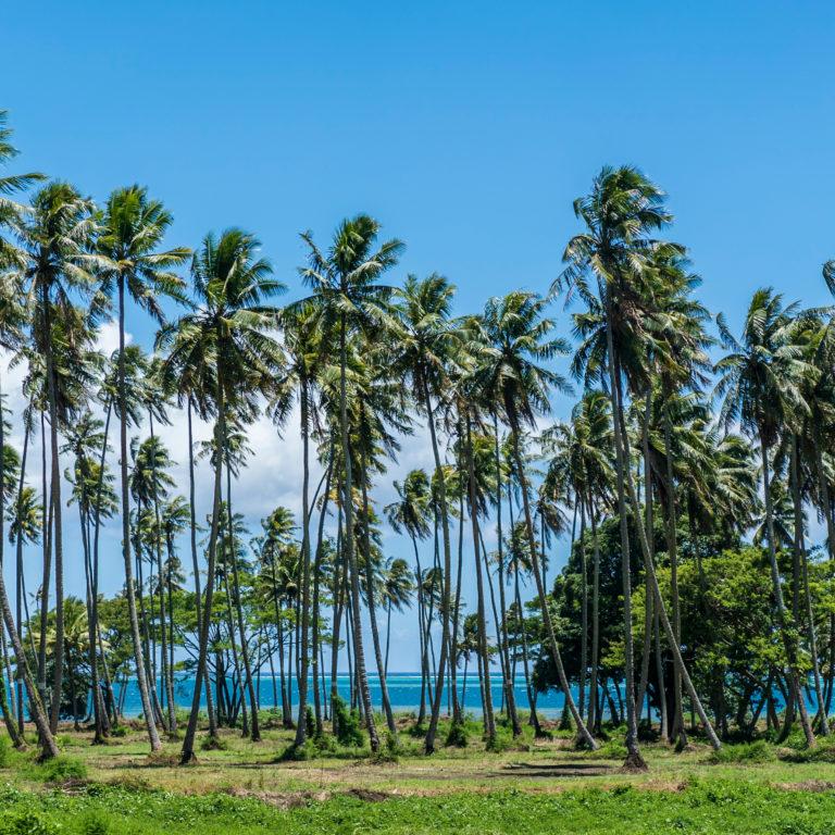 Paradise on Sale in Tahiti & Moorea