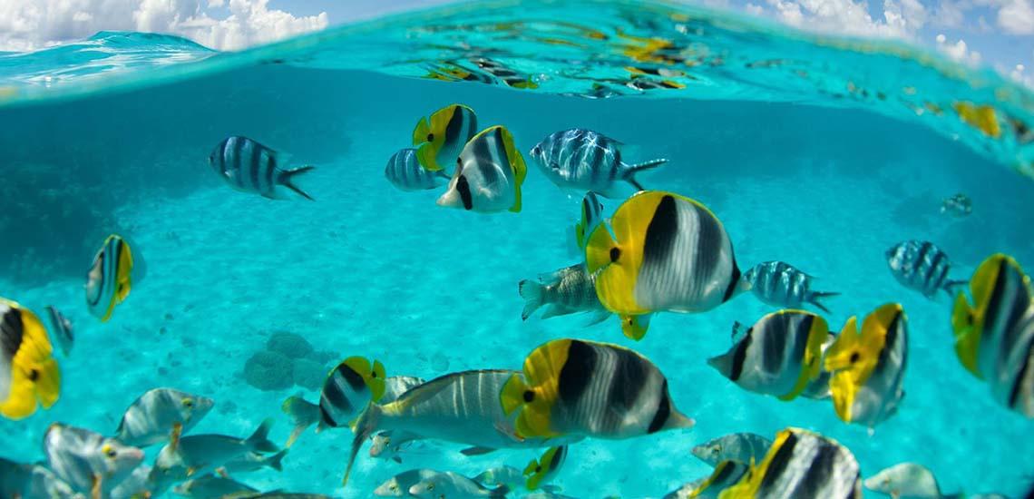 https://tahititourisme.com/wp-content/uploads/2019/04/HUH-Snorkeling-1140x550.jpg