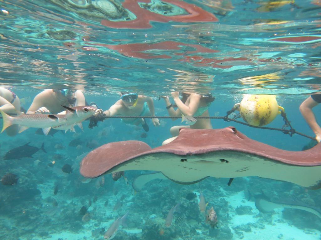 https://tahititourisme.com/wp-content/uploads/2019/04/Snorkeling-Tour-Moorea-Lagoonarium4.gallery_image.1.jpg