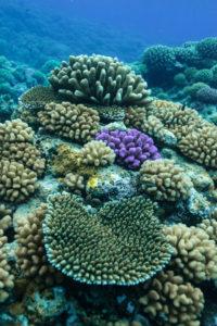 Tahiti coral reefs