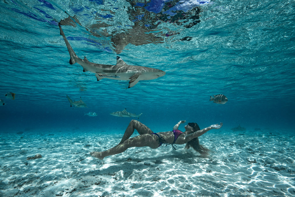 Bora Bora swimming with sharks
