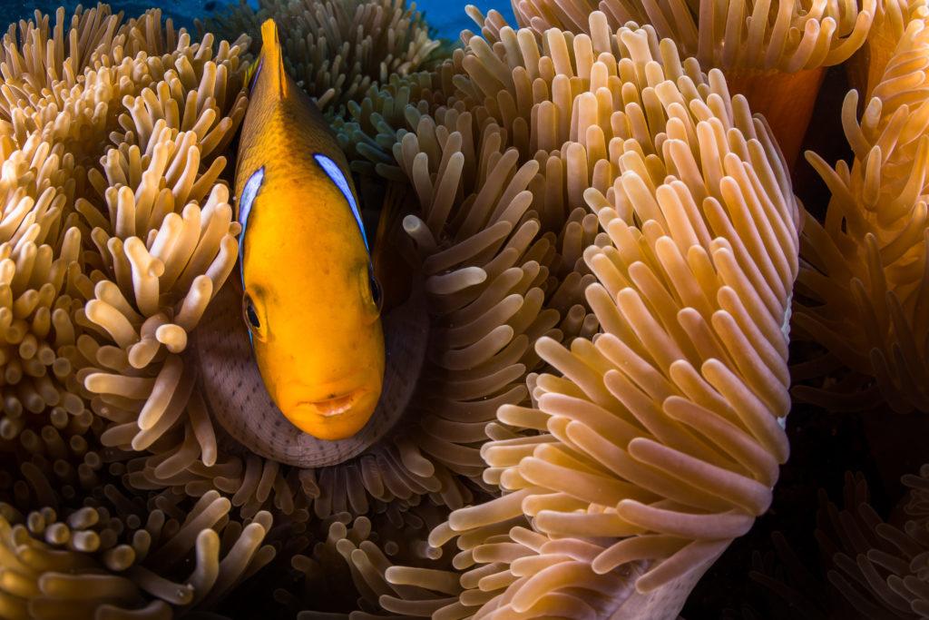 tahiti marine life