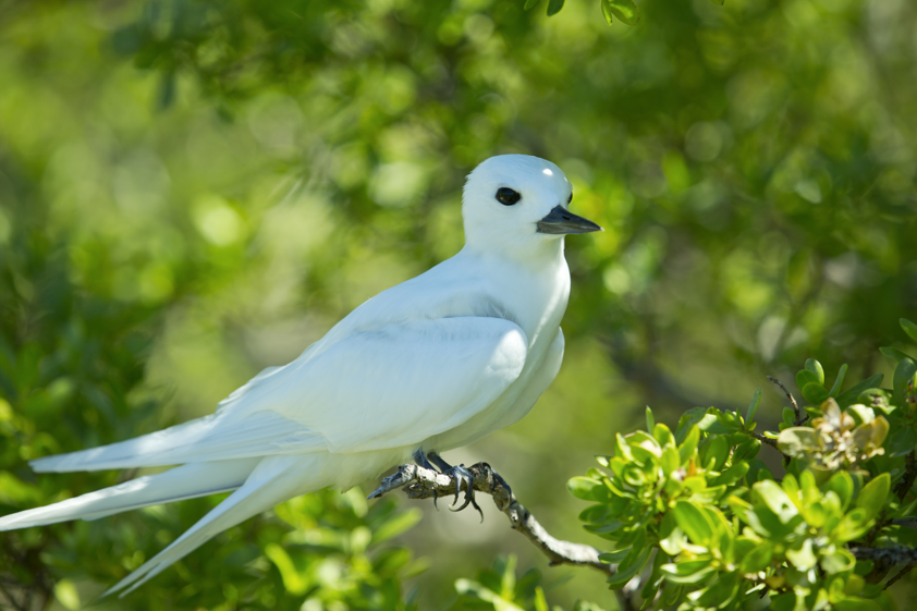 tahiti birds