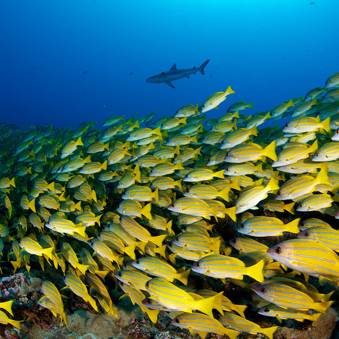 DEMA Special: Your Diving Getaway in Bora Bora & Fakarava