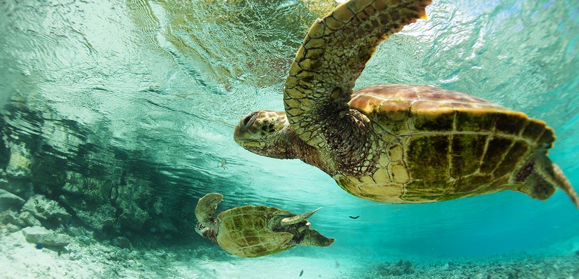 https://tahititourisme.com/wp-content/uploads/2020/01/Le-Meridien-Bora-Bora-Turtle-Rehab-Center.jpg