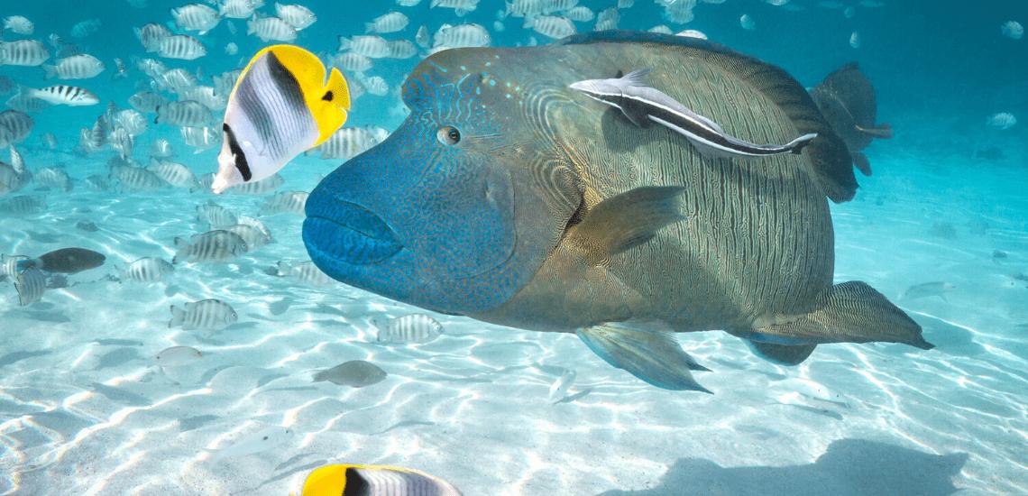 https://tahititourisme.com/wp-content/uploads/2020/02/SnorkelingExpeditions2_1140x550-min.png