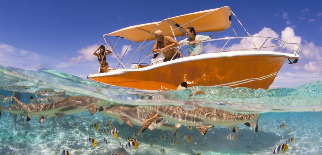 Bora Bora marine life