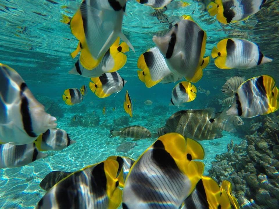 https://tahititourisme.com/wp-content/uploads/2020/06/jardin-corail-tahaa-5.jpg