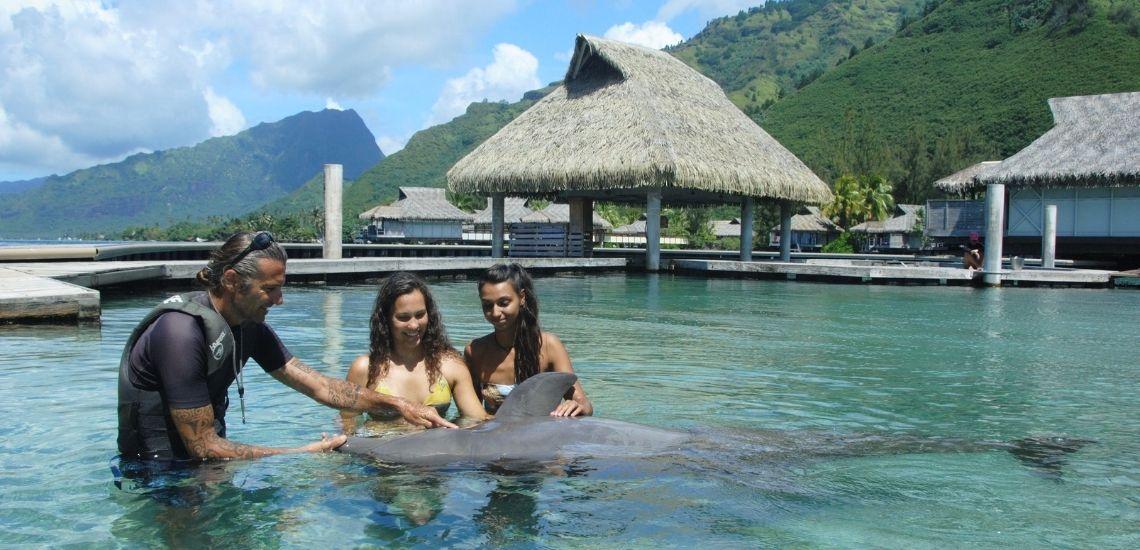 https://tahititourisme.com/wp-content/uploads/2021/01/Offre_Moorea-Dolphin-Center.jpg